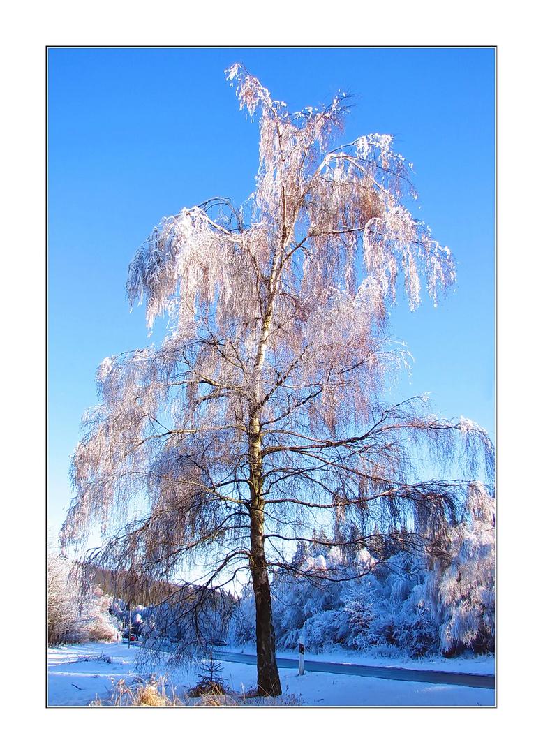 Baum letzter Frost !?