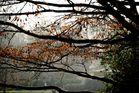 Baum - Luiesenpark