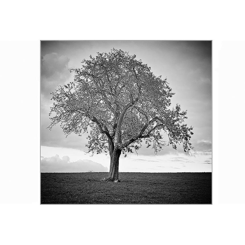 Baum lV