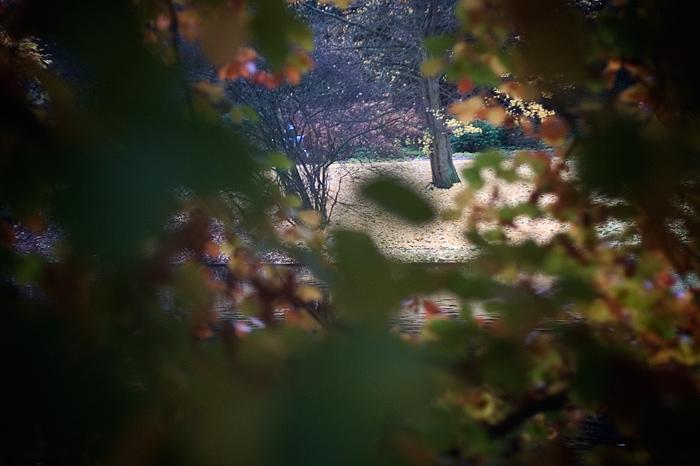Baum macht Herbst