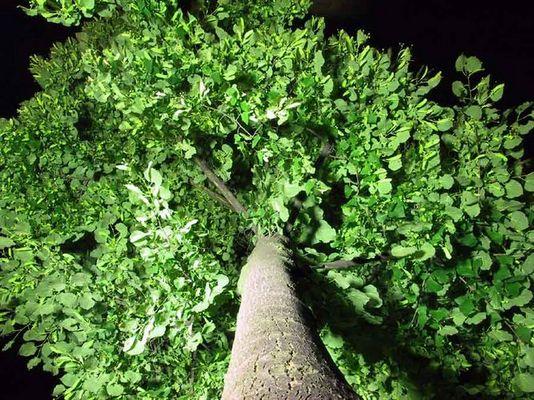 Baum mal anders