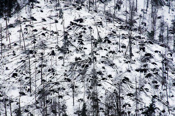 Baum-Mikado