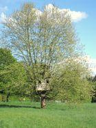 Baum mit Augen ;)