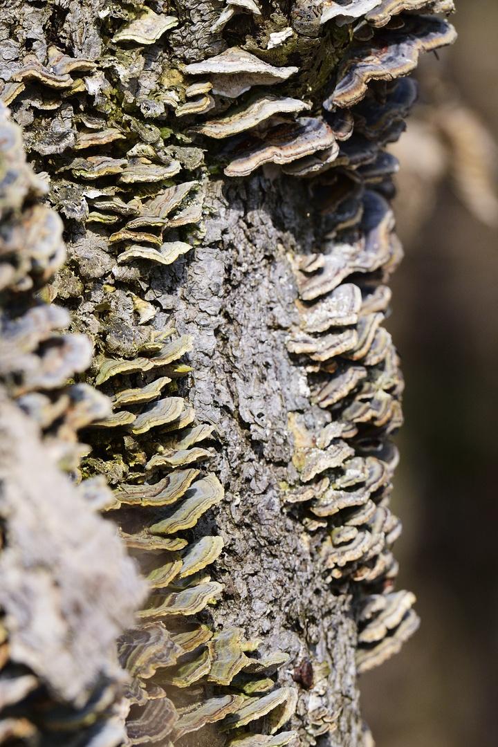 Baum mit Bewuchs