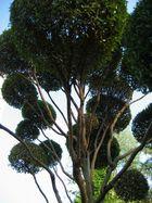 Baum mit Frisur ;-)