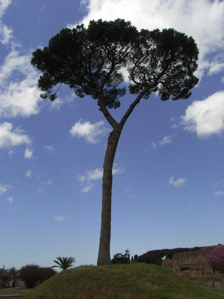 Baum mit Himmelhintergrund