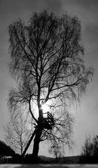 Baum mit Hochsitz
