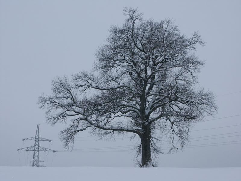 Baum mit hochspannung