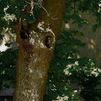 Baum mit Innenleben