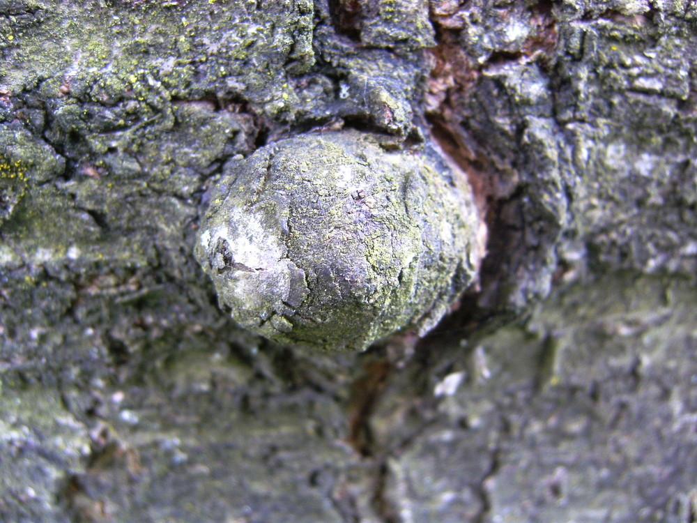 Baum mit Nase