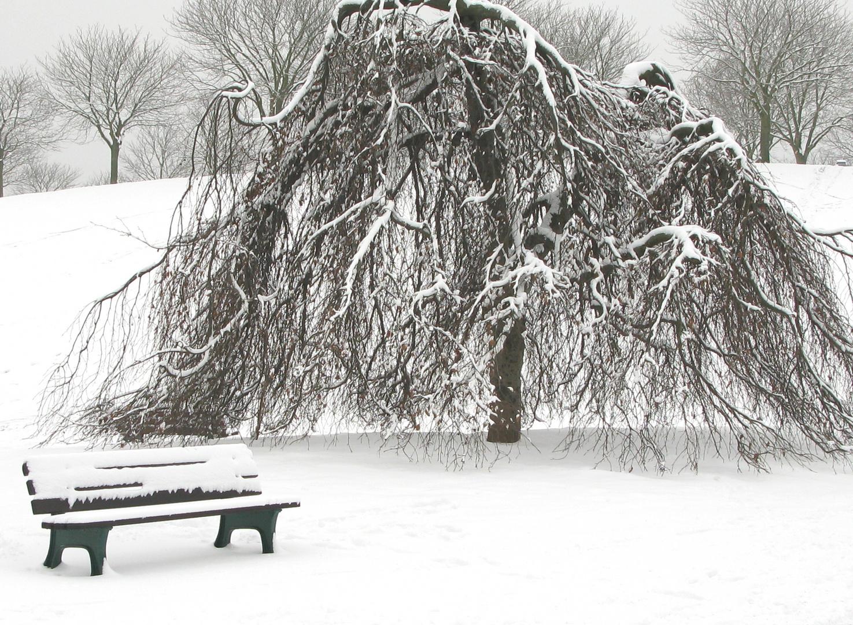 Baum mit Parkbank