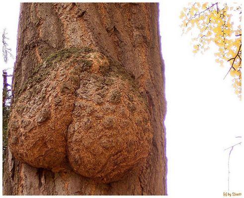 Baum mit Popo