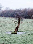 Baum mit Raureif