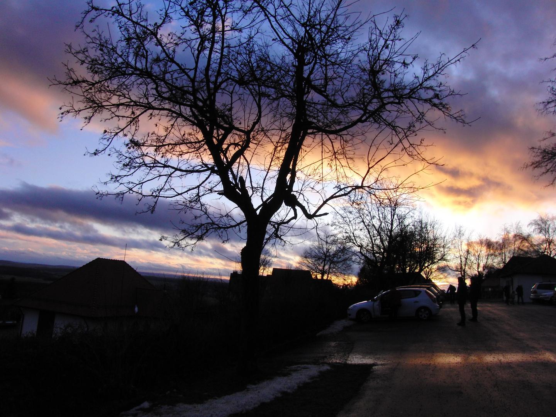Baum mit schönem Wetter