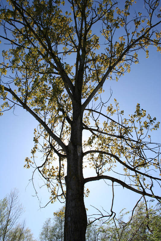 Baum mit Sonne im Hintergrund