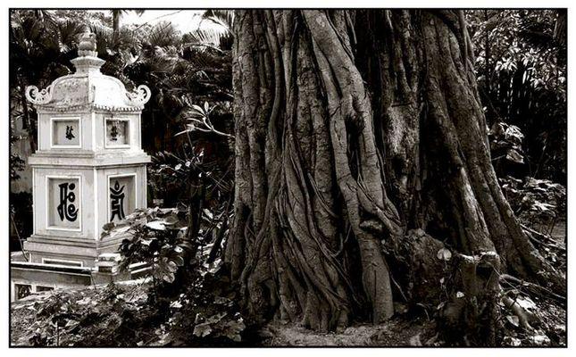 Baum mit Tempel- Vietnam