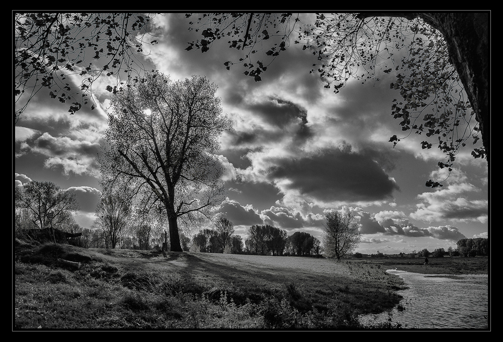 Baum mit Wolken