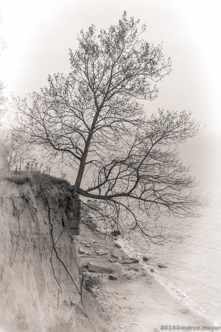 Baum mit Zukunft