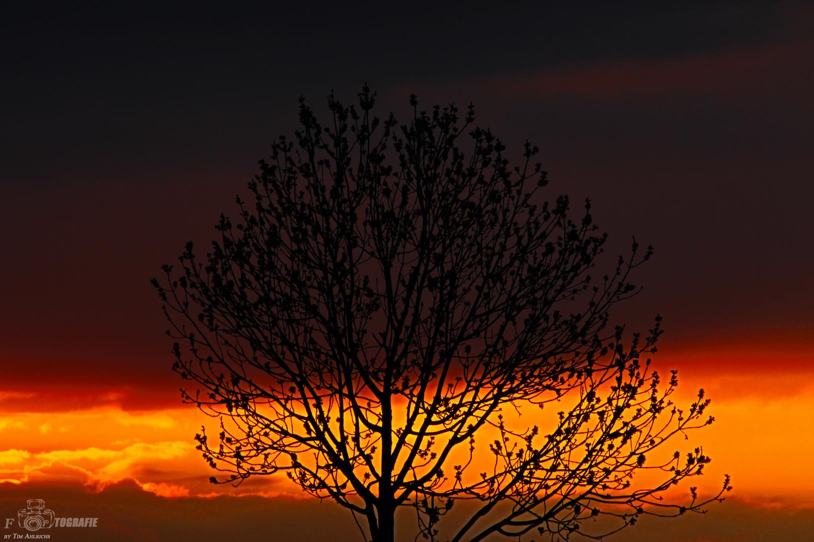 Baum oder Traum ? :D