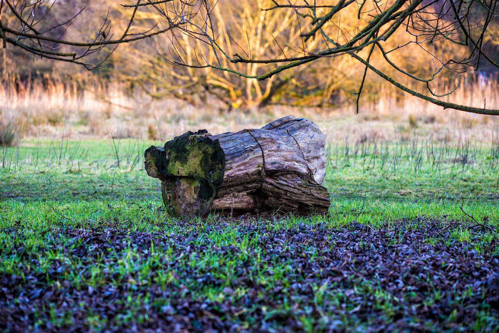 Baum ohne Stamm