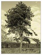 Baum ohne Zeit
