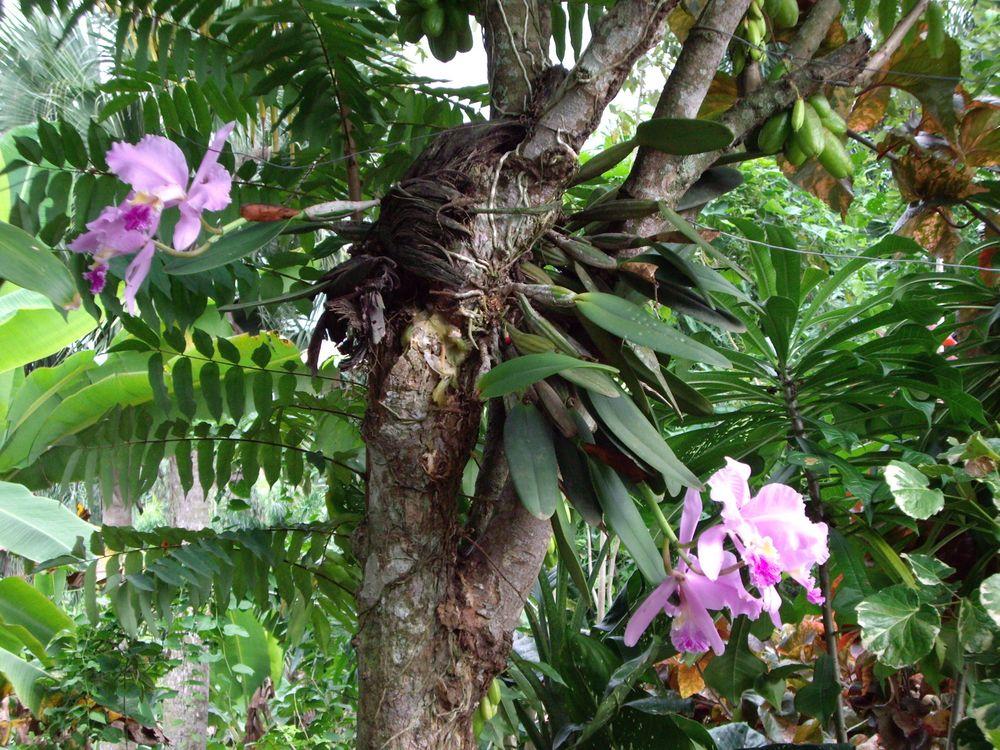 baum orchidee bild foto von oinotna 54 aus reisebilder fotografie 24813333 fotocommunity. Black Bedroom Furniture Sets. Home Design Ideas