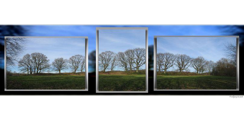 Baum-Panorama