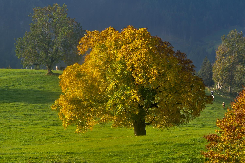 Baum Pracht