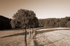 Baum Sepia