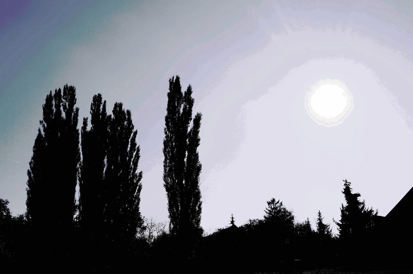 Baum - Silhouette