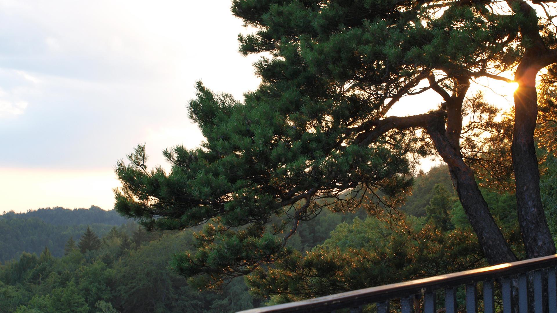Baum & Sonne