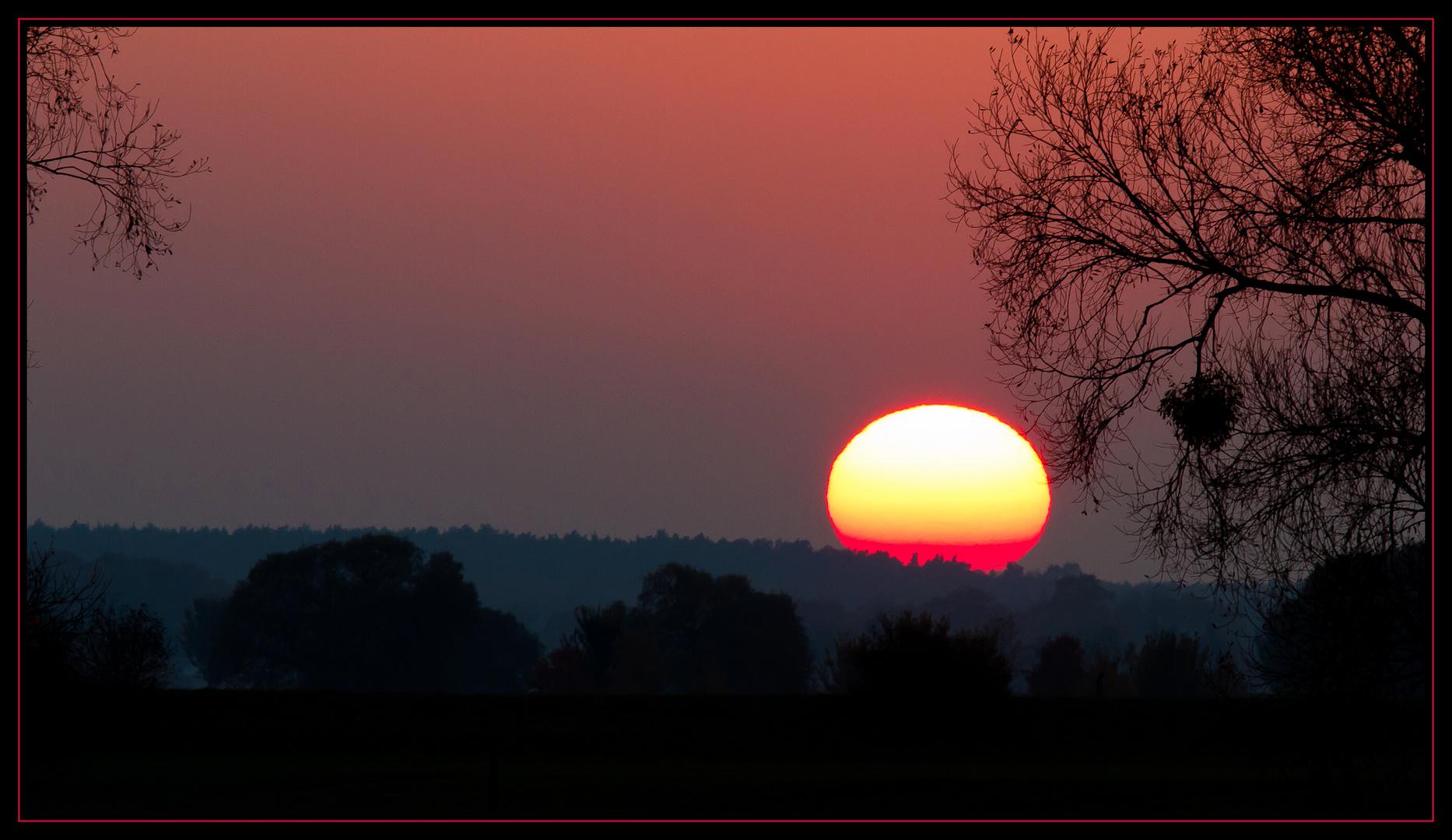 Baum + Sonne + Abend