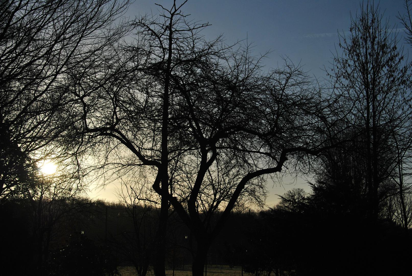 Baum Sonnenaufgang II