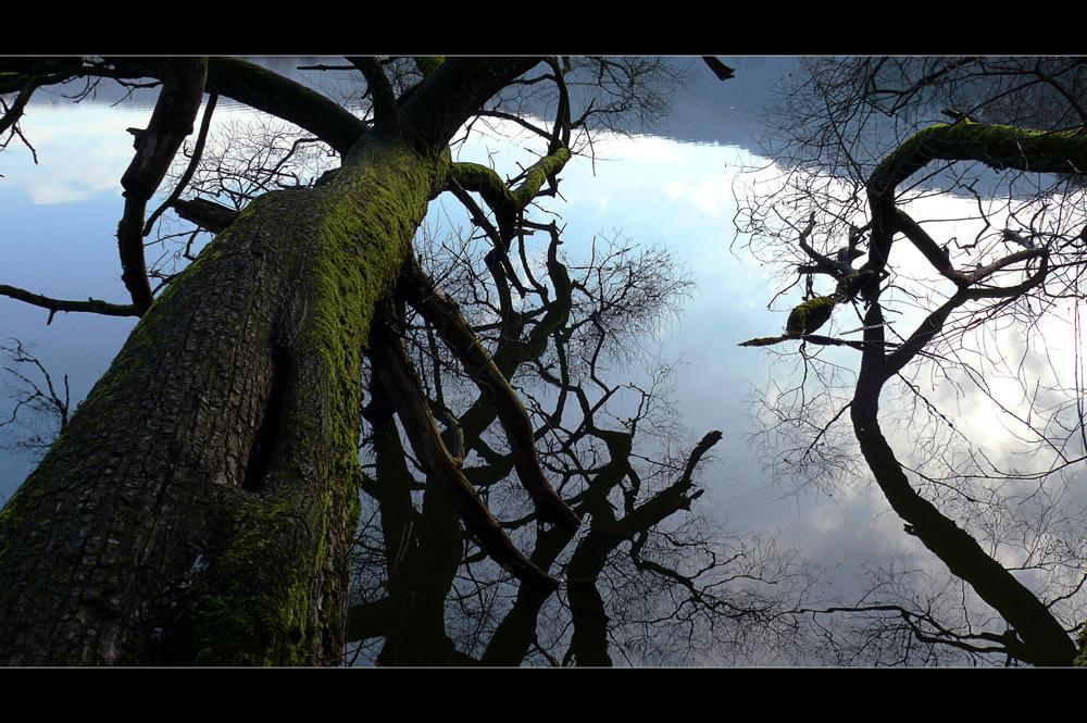 Baum - Spiegel - Baum