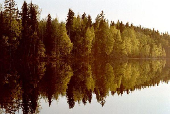 Baum-Spiegelung