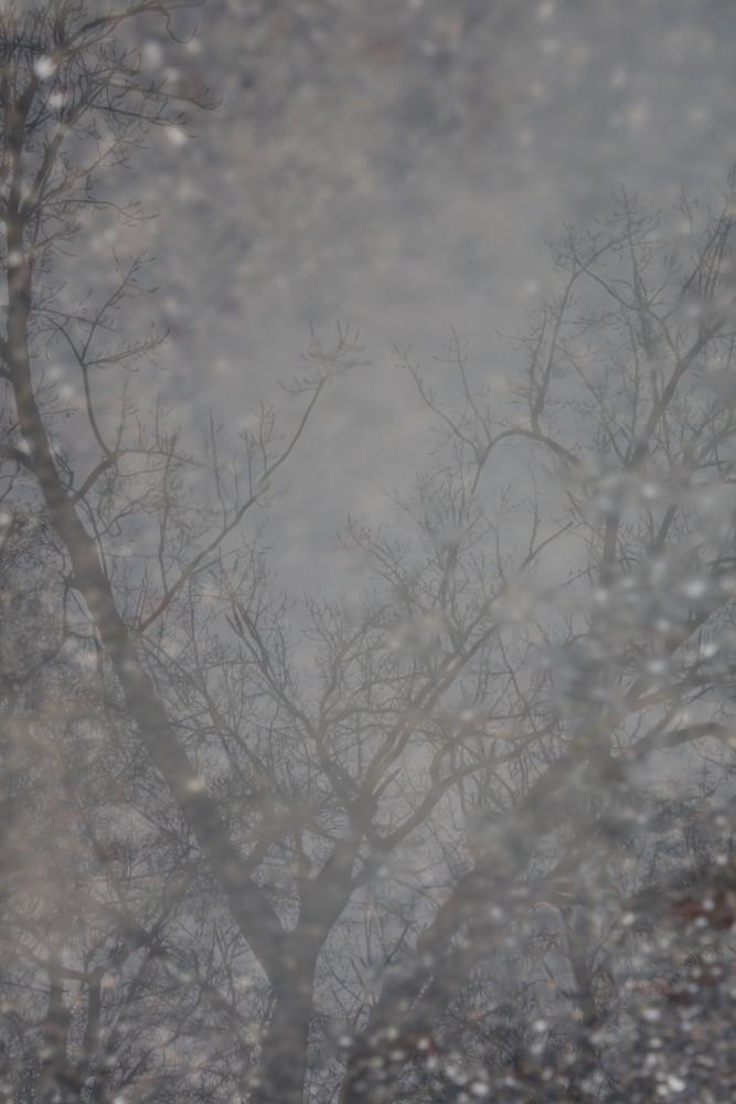 Baum Spiegelung