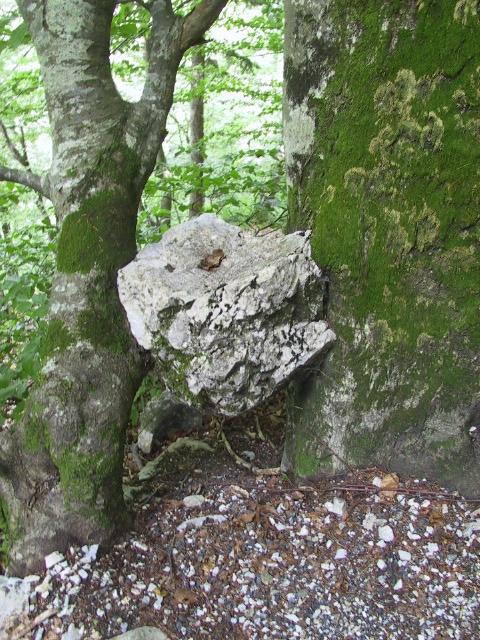 Baum-Stein-Baum