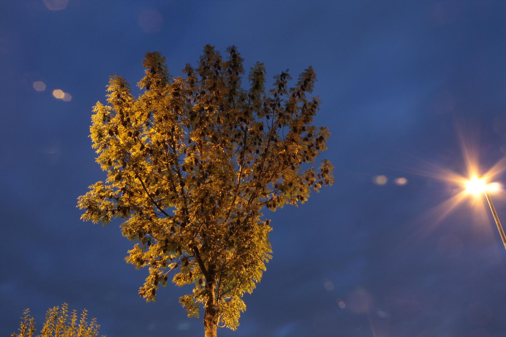 Baum Strassenlaterne
