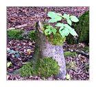 Baum Stumpf mit neuem Leben