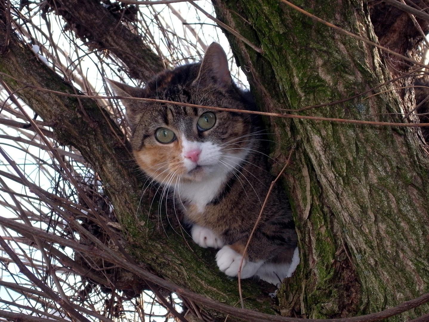 Baum-Tiger