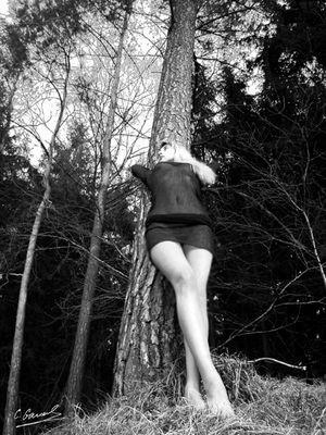 Baum Träume