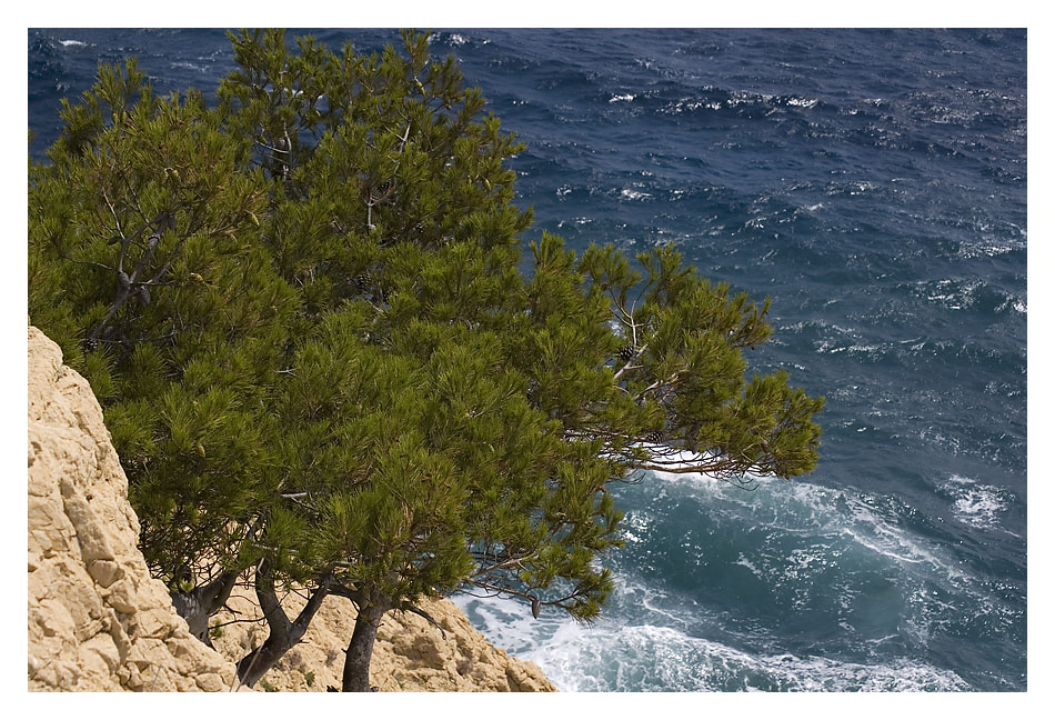 Baum trifft Meer