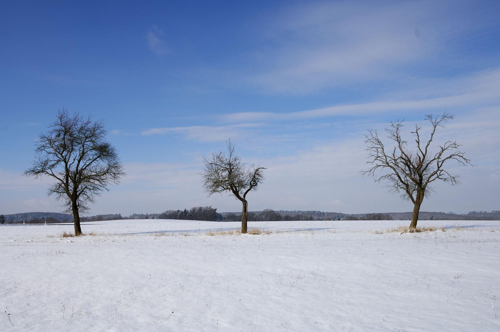 Baum-Trio im Winter