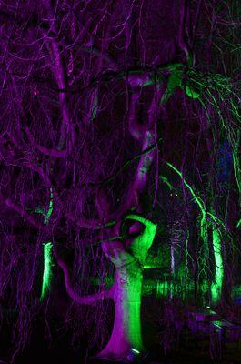 Baum-Troll