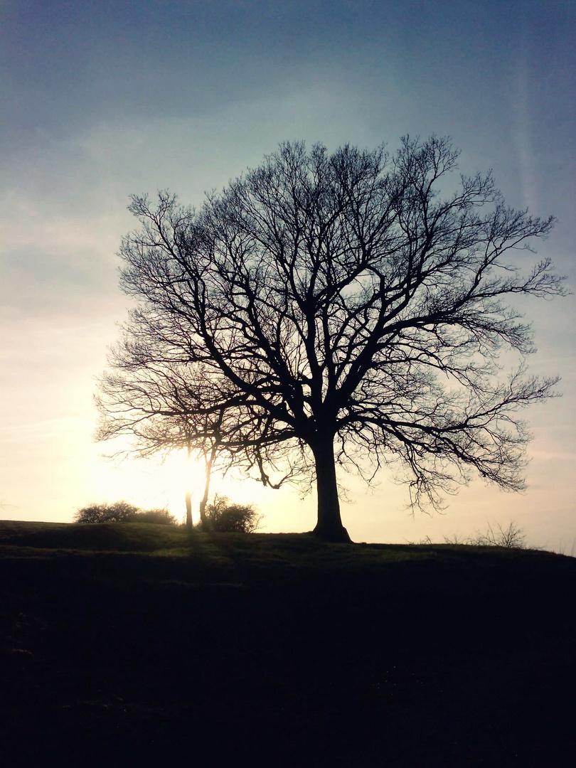 Baum. überragend.