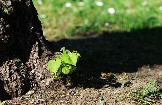Baum und Bäumchen