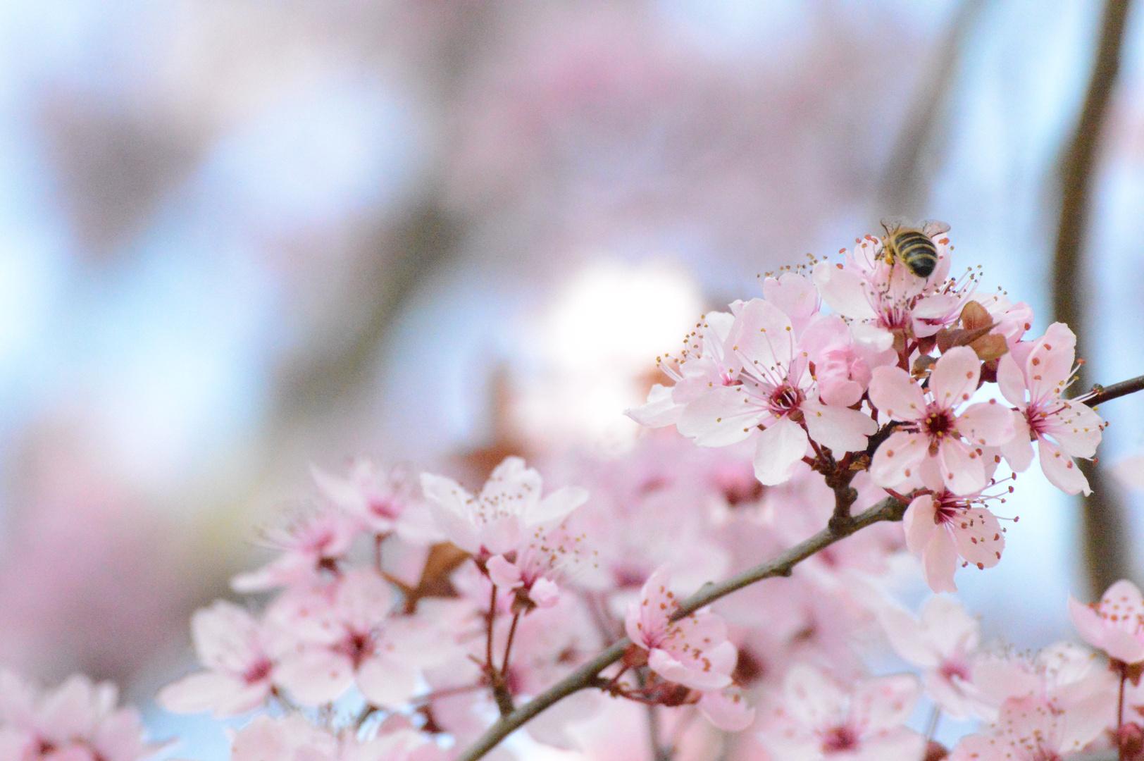 Baum und Biene