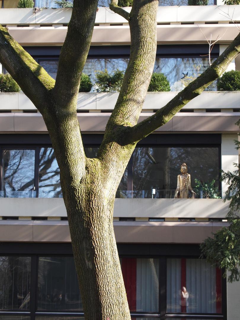 Baum und Buddha