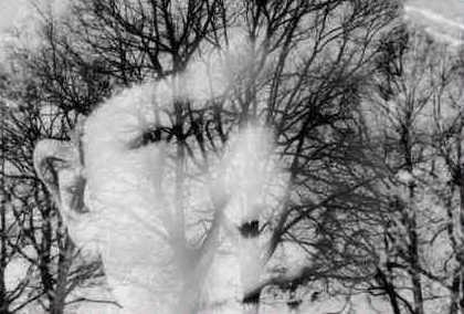 Baum und der Geist