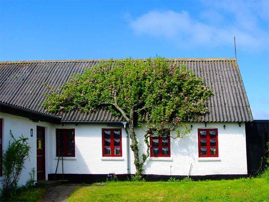 Baum und Haus in Love!